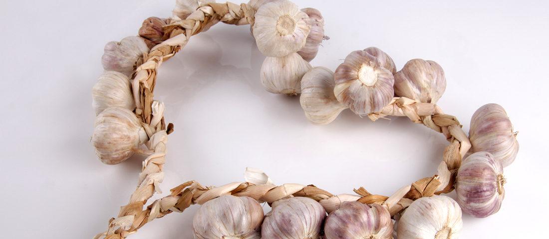 Garlic Reverses Heart Disease