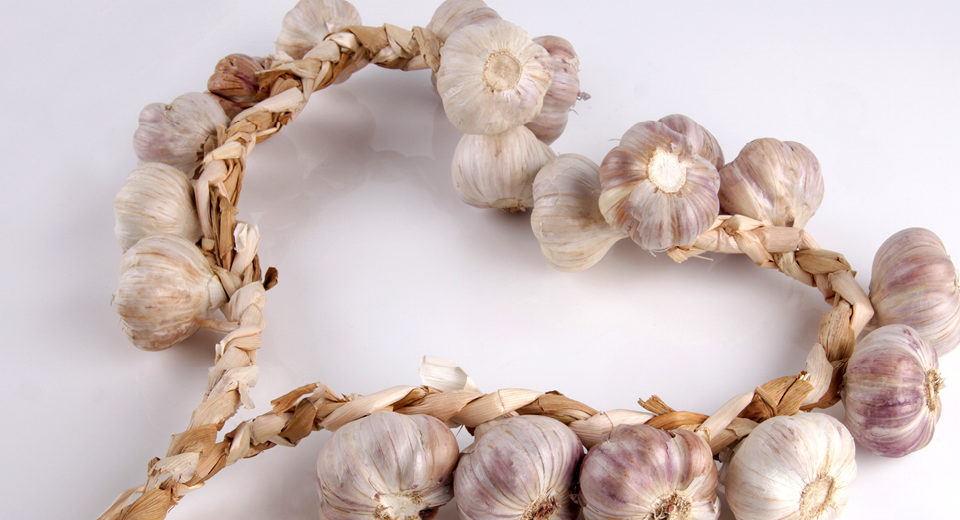 Garlic Reverses Heart Disease